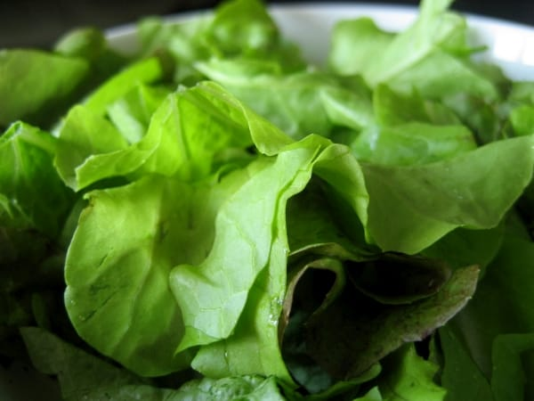 Lettuce mix fresh from the garden