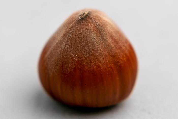 Single hazelnut closeup