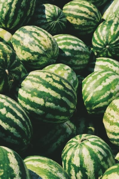 Watermelons in sunshine